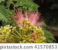 我能够拍摄花朵的照片 41570853