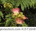 我能够拍摄花朵的照片 41571648