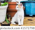 고양이, 아기 고양이, 새끼 고양이 41572798