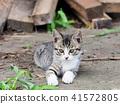 아이 고양이 41572805