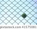 테니스 공 41575081