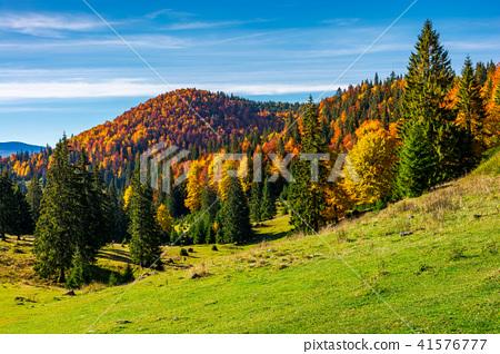 beautiful autumnal landscape of Apuseni mountains 41576777