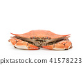 Boiled green crab (♀): cooked blue crab (female) 41578223