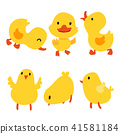 chick and duck collection 41581184