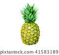 Isolated vector fruit yellow painting pineapple 41583189