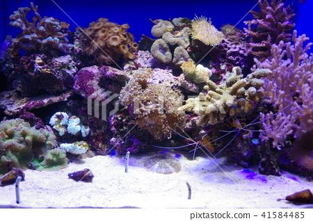 在深海水族館的深海魚 41584485