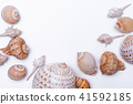 Seashell collection isolated on white background. 41592185