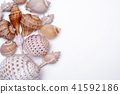 Seashell collection isolated on white background. 41592186
