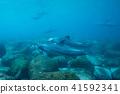 海豚 海底的 海裡 41592341