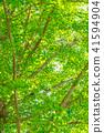 【도쿄】 신록의 은행 나무 41594904
