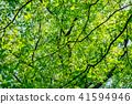 新鮮綠色形象 翠綠 鮮綠 41594946
