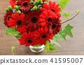 非洲菊的安排 41595007