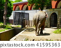 elephant, animal, animals 41595363