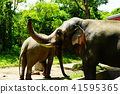elephant, animal, animals 41595365