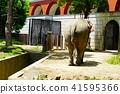 elephant, animal, animals 41595366