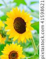 꽃 이야기 41598621