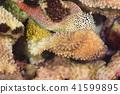 어류, 바닷물고기, 열대어 41599895