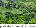 marsh, wetlands, fresh verdure 41602647