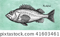 Ink sketch of rockfish. 41603461