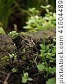 青蛙(八月) 41604489