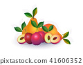 pear plum fruit on white background, healthy lifestyle or diet concept, logo for fresh fruits 41606352