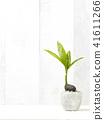 Foliage plant 41611266