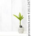 Foliage plant 41611267