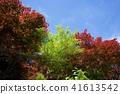 vegetation, vegetative, fresh verdure 41613542