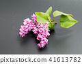 Bunch of lilac flowers isolated  41613782