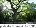 아 쓰타 신궁의 녹나무 41622705