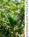 胡椒 柿子椒 青椒 41625285