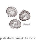 Chestnut illustration, engraving vector. 41627512