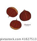 Chestnut illustration, engraving vector. 41627513