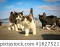 猫島의 도둑 고양이들의 생활 41627521