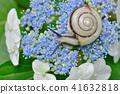 수국 달팽이 41632818