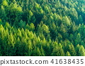 forest, landscape, scenery 41638435