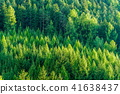 forest, landscape, scenery 41638437