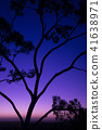 Tree silhouette at dusk in Ipswich, Queensland 41638971