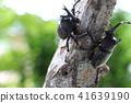 虫子 漏洞 昆虫 41639190