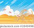 นา,ชาวนา,เกษตรกรรม 41640498