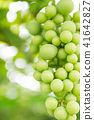 포도, 과일, 후르츠 41642827