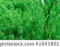 Water plants 41643802