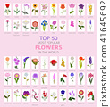 Your garden flowers guide infographic. Top 50 41645692