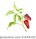 Red bell pepper with leaves 41648192