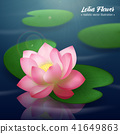 Lotus Flower Realistic Background 41649863