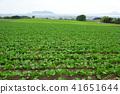 홋카이도 하코다테 도라지 마을의 밭 농사 지역으로 비트 밭의 초여름 풍경을 촬영 41651644