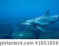 海豚 41651656
