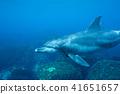 海豚 41651657