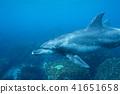 海豚 41651658