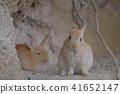 토끼, 동물, 작은 동물 41652147